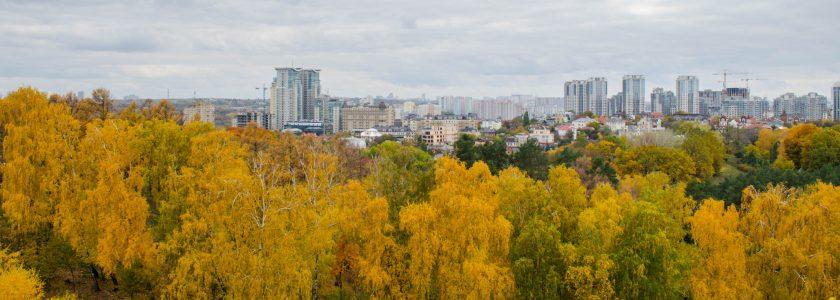 panorama miasta wraz ze ścianą drzew